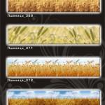 Фартуки_Пшеница_1